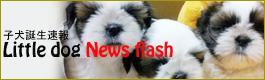 子犬ブログ